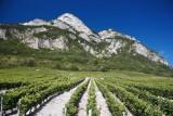 Coteaux Francin Chignin Bergeron Vin de Savoie