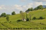Vignes gamay Jean Perrier