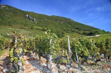 Pinot Noir Jean Perrier et Fils