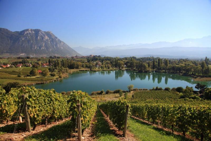 Vignoble Abymes Lac saint andré combe de Savoie