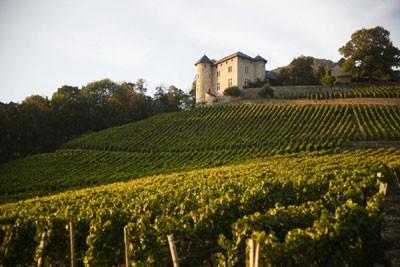 Château de Monterminod vineyard